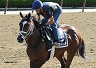 Materiality, Frosted Drill Toward Belmont