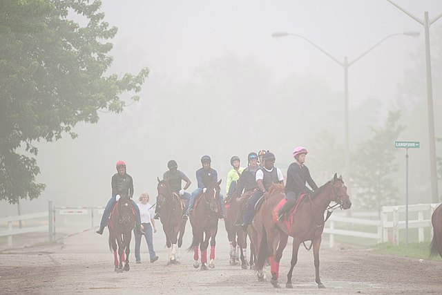 Toronto Ont June 15, 2015.Woodbine Racetrack.Thoroughbred's at Woodbine return to training as the fog rolls in early at Woodbine Racetrack.Thoroughbred racing resumes Wednesday June 17,2015 with a first race post time at 6:45pm. michael burns photo