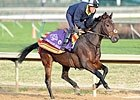 Breeders' Cup Chat: Ten Longshots to Consider
