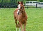 Slideshow: Groupie Doll's First Foal At Home