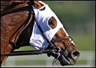 Thoroughbred Horse Show Association Launched