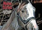 Free Report: New Stallions for 2010