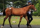 Weemissfrankie Filly Leads Japan Foal Sale