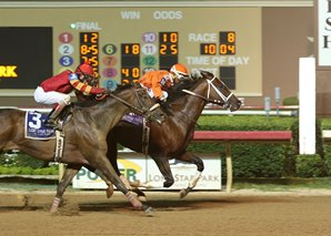Texas Bling Retired to Stud