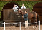 Mr Notorious Tops Del Mar Paddock Sale