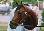 Hangin' With Haskin: Loss of a Thoroughbred
