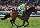 British Steeplechaser Kauto Star Euthanized