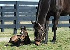 Slideshow: Zenyatta and her Bernardini Colt