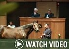 Video:  Fasig-Tipton Kentucky Selected Fall Mixed Sale
