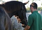 Through The Lens: Zenyatta's New Friends