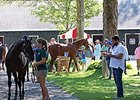 Fasig-Tipton Saratoga Sale Day 1 Notebook