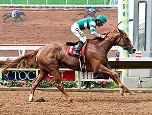 Stellar Wind Dominant in Torrey Pines