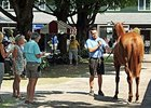 Gross, Average Rise at New York-Bred Auction