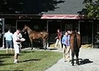 Fasig-Tipton Saratoga Sales Preview