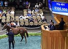 Oxley Goes to $300,000 for Speightstown Filly