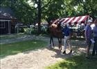 Fasig-Tipton Saratoga: Hip 104 War Front filly