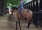 Smokey the Pony Reining at Saratoga