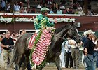Honor Code, Tonalist Gear Up for Belmont Meet