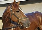 A Horse For Any Course: Wise Dan