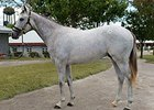 Tapit and Gainesway Rule at Keeneland
