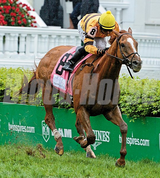 Wise Dan with jockey Jose Lezcano in the irons wins the 27th running of The Woodford Reserve Turf Classic at Churchill Downs in Louisville, Kentucky May 3, 2013. Photo by: Skip Dickstein