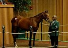 Divine Park Filly Brings $475,000