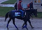 Breeders' Cup: Golden Horn Returns from Training