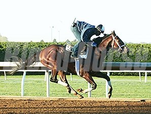 Mshawish - Keeneland, October 17, 2015.