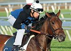 Bobby's Kitten Seeking Second Turf Sprint