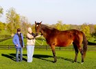 Leslie's Lady in Foal to American Pharoah