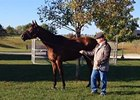 Beholder Grazing at Keeneland Oct. 21