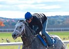 Frosted, Other NY-Based BC Contenders Work