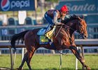 American Pharoah Records Final Workout