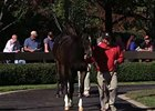 Fasig-Tipton October Sale Day 3 Wrap