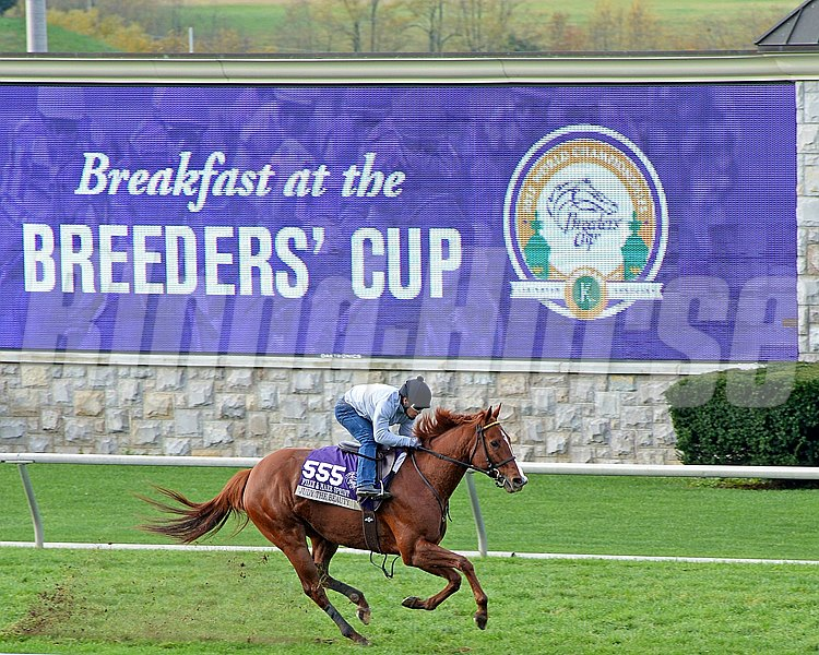 Caption: Judy the Beauty