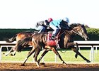 Conquest Daddyo Pleases in BC Work