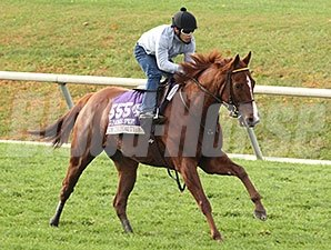 Judy the Beauty gallops at Keeneland Oct. 25.