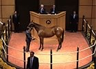 Fasig-Tipton October Sale Session 2 Wrap