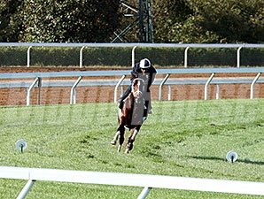 Mshawish - Keeneland, October 11, 2015.