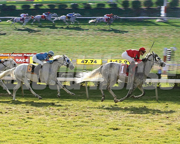 Harpoon #1 and jockey Samuel Camacho Jr. scared off the rest of the field in the Gray Ghost Starter Handicap for Gray Thoroughbreds on Halloween at the Monmouth Park at the Meadowlands All-Turf Meet in East Rutherford, New Jersey.