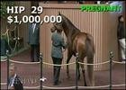 Keeneland November Sale: Comedy - Hip 29