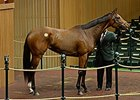Claiborne Goes to $675K for Malibu Moon Filly