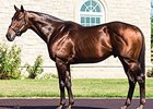 Adena Springs Stallion Tiago Euthanized