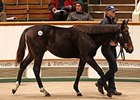 Swiss Spirit Colt Leads Tattersalls Session