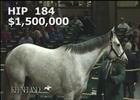 Keeneland November Sale: Shook Up - Hip 184
