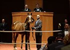 Weanling Colt by Tapit Brings $600,000 at F-T