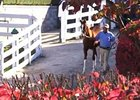 Keeneland November Sale Day 2 Recap