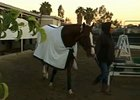 California Chrome and Art Sherman Nov. 7