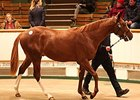 Tattersalls Top Pair to Shadwell Estates