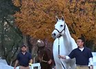 Keeneland November Sale Session 4 Wrap